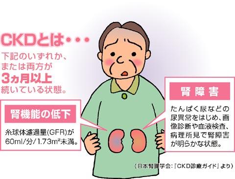 の はたらき 腎臓 腎臓の働きと検査